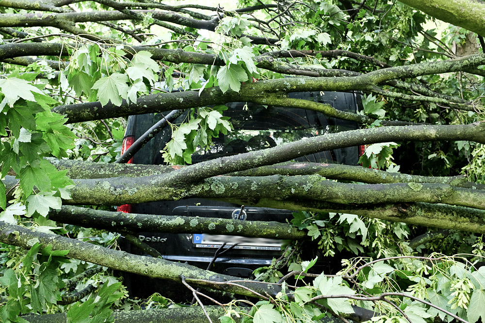 Die Anzahl der liegenden Bäume nimmt ständig ab. © Stadt Herne_Thomas Schmidt