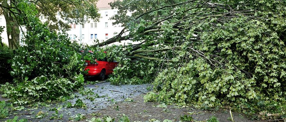 Parkendes Auto, von einem Baum begraben. © Stadt Herne_Thomas Schmidt