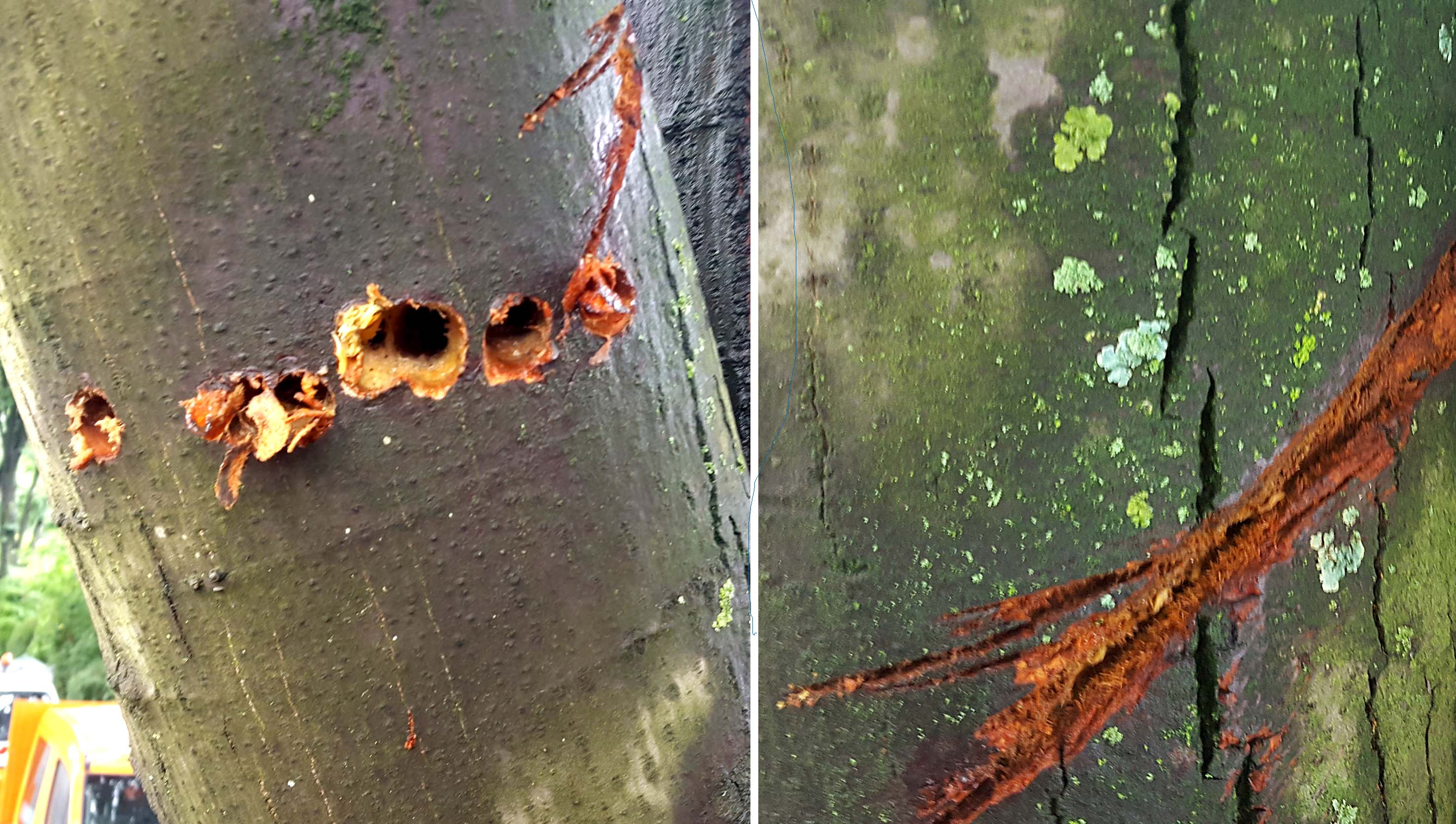 Diese zwei Aufnahmen zeigen, was der Täter an einem vollführt hat.