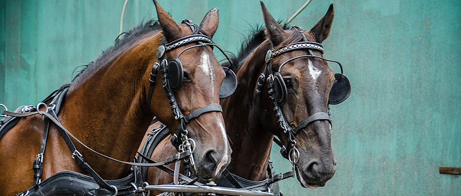 Impressionen vom Pferdemarkt 2016©Thomas Schmidt, Stadt Herne