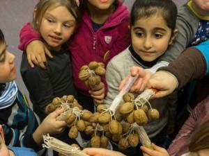 Kinder stellen Instrumente her - hier Rasseln aus Walnüssen. © Christian Ribbe.