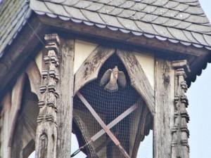Der arme Turmfalke - noch gefangen im Kirchturm. ©Horst Martens, Stadt Herne.