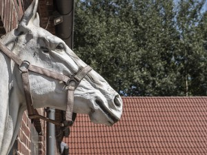 Pferdemarkt_2018_copyright_Thomas_Schmidt_Stadt_Herne_043_web_beitrag