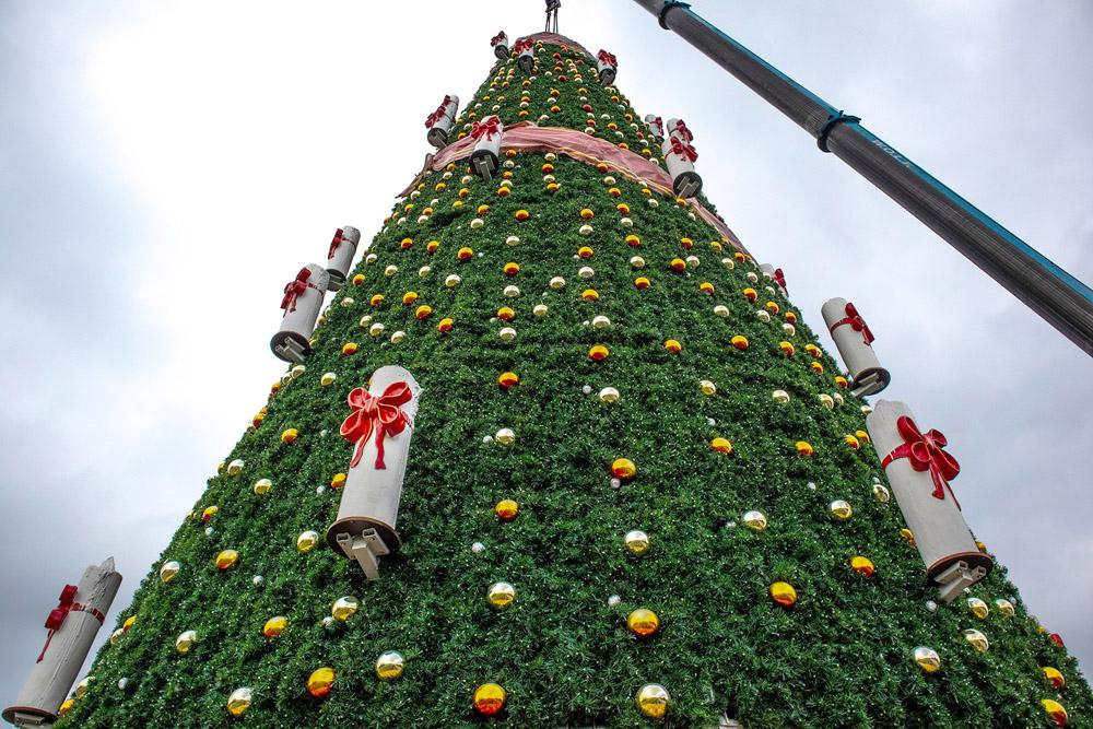 Größter Tannenbaum.Größter Weihnachtsbaum In Crange Montiert Inherne