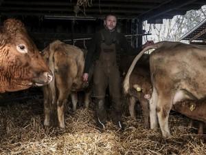 Heinz Böckmann inmitten seiner Limousin-Rinder ©Thomas Schmidt, Stadt Herne